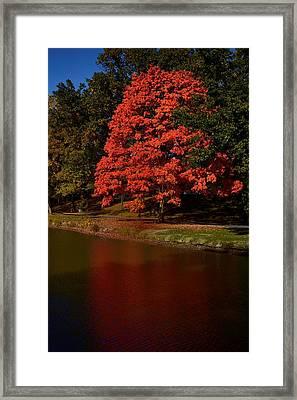 Autum Color Framed Print
