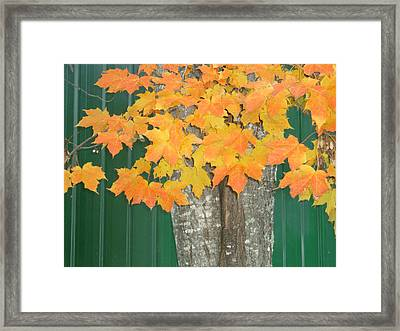 Autum Leaves Framed Print by Pamela Turner