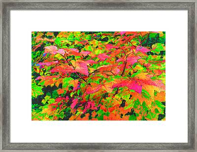 Autum Maple Leaves 3  Framed Print by Lyle Crump