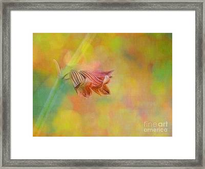 Autumn . . . Gently Framed Print by Judi Bagwell