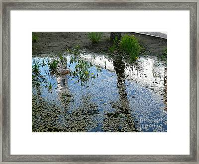 Autumn   Framed Print by Al T