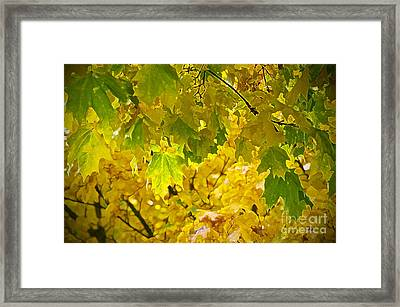Autumn - Mellow Time Framed Print by Gwyn Newcombe