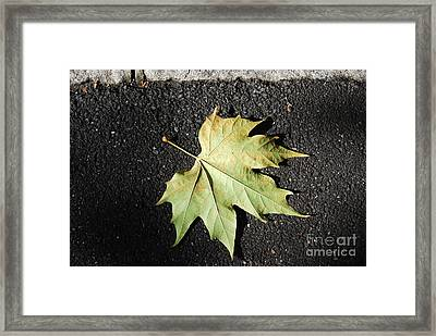 Autumn 10 Framed Print by Elena Mussi