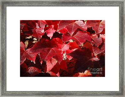 Autumn 11 Framed Print by Elena Mussi