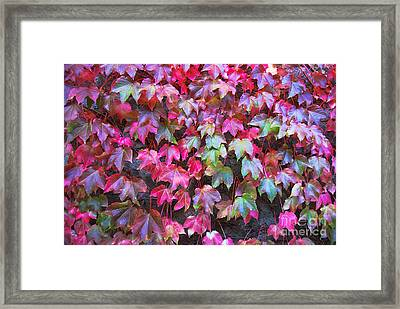 Autumn 12 Framed Print by Elena Mussi