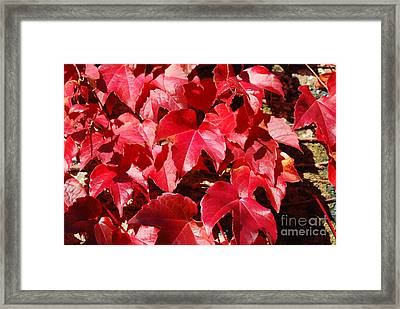 Autumn 13 Framed Print by Elena Mussi