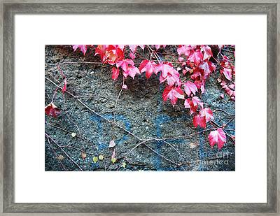 Autumn 14 Framed Print by Elena Mussi