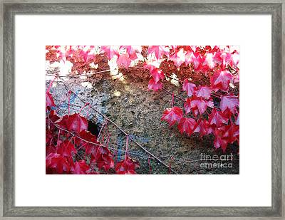Autumn 16 Framed Print by Elena Mussi