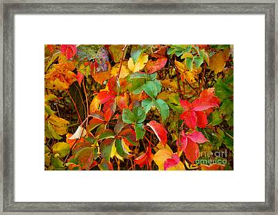 Autumn 3 Framed Print by Elena Mussi