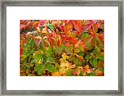 Autumn 4 Framed Print by Elena Mussi