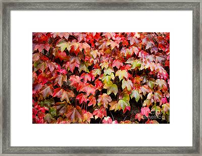 Autumn 5 Framed Print by Elena Mussi