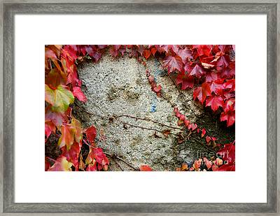 Autumn 6 Framed Print by Elena Mussi