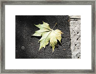 Autumn 9 Framed Print by Elena Mussi