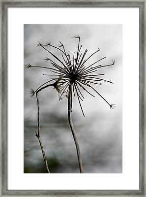 Autumn Abstract Framed Print by Valia Bradshaw