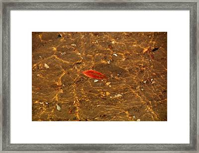 Autumn Afloat Framed Print by Rachel Cohen