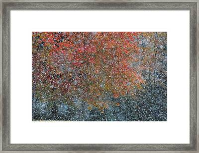 Autumn And Winter Framed Print by Kimberly Little