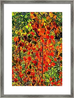 Autumn Angels..... Framed Print by Tanya Tanski