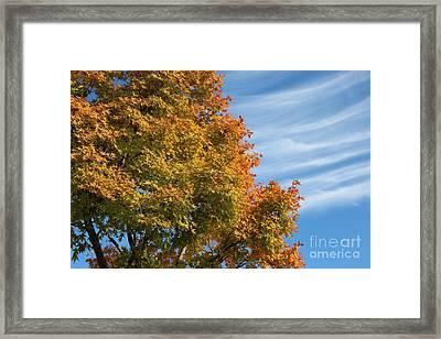 Autumn Anticipation Framed Print