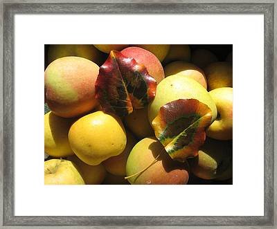 Autumn Apple Afternoon Framed Print