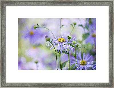 Autumn Asters Framed Print by Jacky Parker