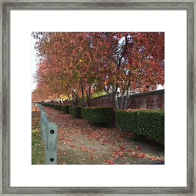 Autumn At Its Best Framed Print by Naomi Berhane