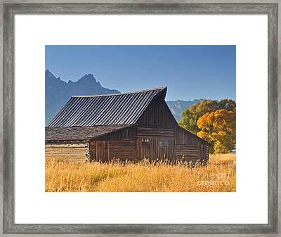 Autumn At The Barn Grand Teton National Park Framed Print