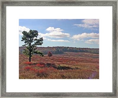 Framed Print featuring the photograph Autumn At The Meadow by Shirin Shahram Badie