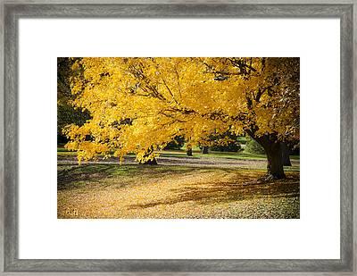 Autumn At Wildwood Park No.5 Framed Print