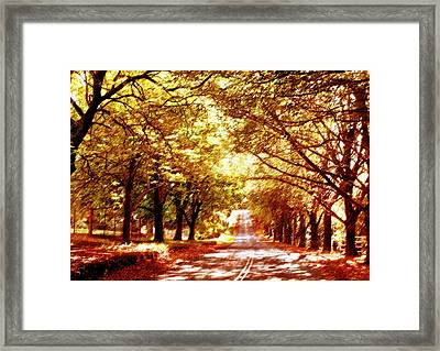 Autumn Avenue Framed Print by Linde Townsend