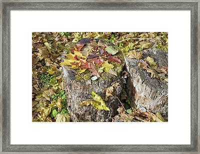 Autumn Berries And Leaves  Framed Print by Aleksandr Volkov