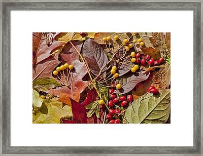 Autumn Berries And Leaves Background  Framed Print by Aleksandr Volkov