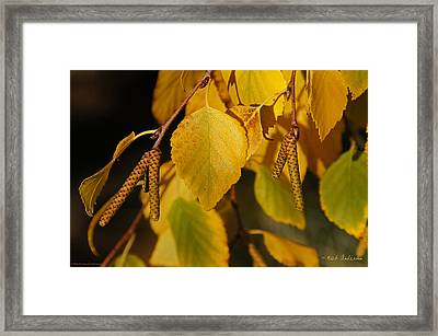 Framed Print featuring the photograph Autumn Birch In Southern Oregon by Mick Anderson