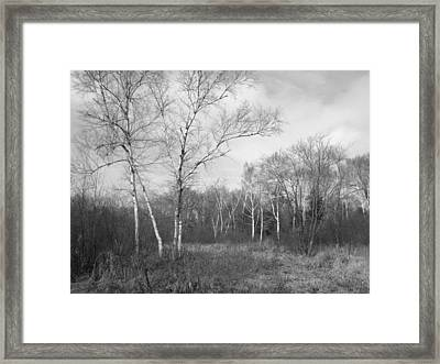 Autumn Birches Framed Print by Anna Villarreal Garbis