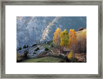 Autumn Birches Framed Print by Evgeni Dinev