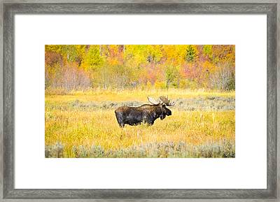 Autumn Bull Limited Edition Framed Print by Greg Norrell