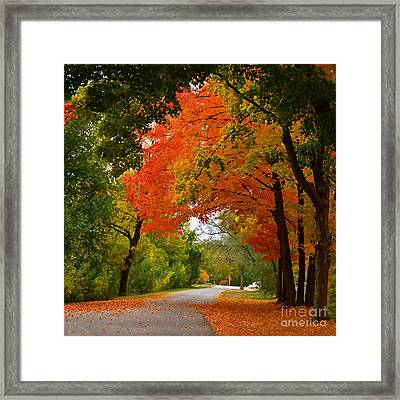 Autumn Canopy Framed Print by Sue Stefanowicz