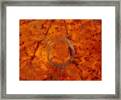 Autumn Circle Framed Print