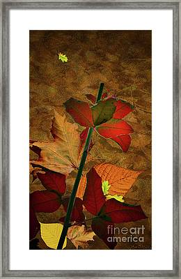 Autumn Color Framed Print by Bruno Santoro