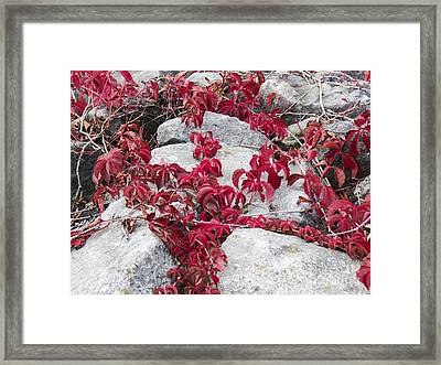 Autumn Color Is Red Framed Print