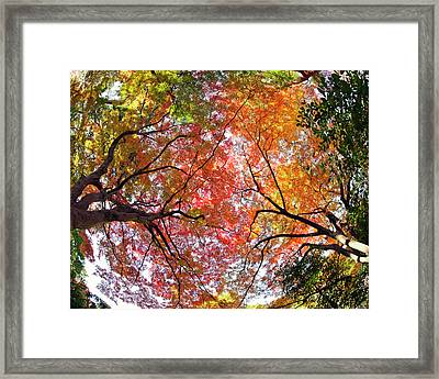 Autumn Color Framed Print by Shuya Seno Photography