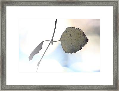 Autumn Colored Birch Leaf Framed Print by Ulrich Kunst And Bettina Scheidulin