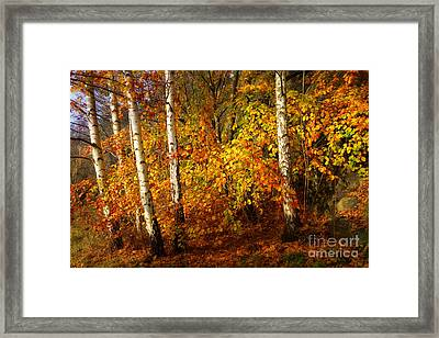 Autumn Colorplay Framed Print