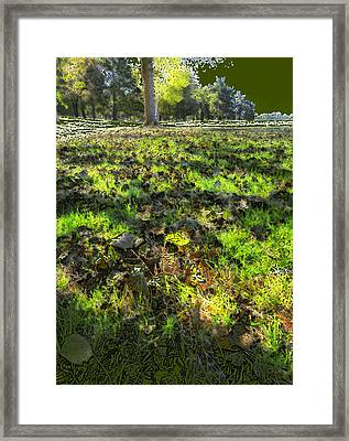 Autumn Colors Framed Print by Anne Mott