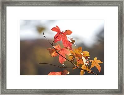 Autumn Colors-arkansas Framed Print by Douglas Barnard