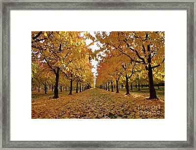 Autumn Colors At He's Best Framed Print