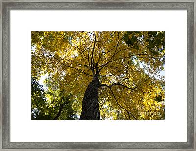Autumn Colors Framed Print by Darleen Stry