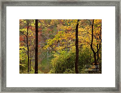 Autumn Colors In The Forest Framed Print by Iris Greenwell