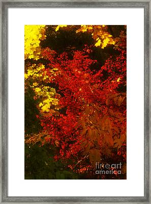 Autumn Colors Framed Print by Jeff Breiman