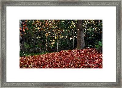 Autumn Colors Framed Print by Kaye Menner