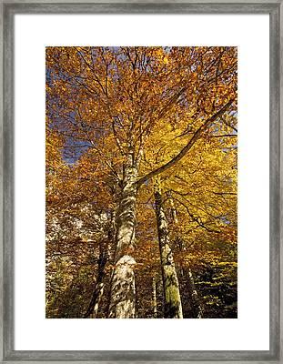 Autumn Colour Framed Print by Bob Gibbons